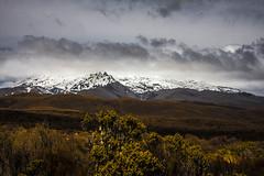 Tongariro (Janis Sabanovs) Tags: montains newzelans tongariro vulcano nature tree sky hiking landskape