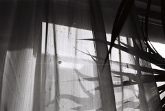 Curtain and plant (LexylexyXiao) Tags: fineart photography flim memory