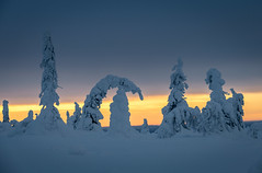 The Gathering (MrBlackSun) Tags: ice sculpture frozen tree gathering meeting finland arctic sunset nikon d850 riisitunturi national park