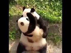 Cute Panda Love Mommy (tipiboogor1984) Tags: aww cute cat funny dog youtube