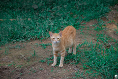 Cat (Michell Fotografia) Tags: riodejaneiro natureza nature yellow sítio green cidademaravilhosa brasil brazil coth5 travel contraluz sun cores landscape paisagem viagem cat catlovers portrait photography animal eyes nose ears coth tabby gato cats animais olhos malhado pet orange fence macro feline kitty