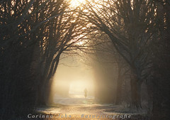 Fahrradpendler (Corinna John) Tags: beautiful contrast fog golden landscape light mist morning mysterious mystic nature outdoors path scenic spring springtime sunweathersky sunlight trees weather winter