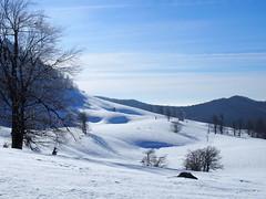 hepehupa / bumps (debreczeniemoke) Tags: tél winter hó snow túra hiking erdő forest fa tree hegy mountain gutin gutinhegység gutinmountains sziklabérc piton kakastaréj creastacocoşului olympusem5