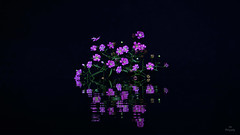 Colors in the Dark... (Piet photography) Tags: macro reflection flowers reflectie gypsophila