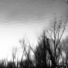 Trees In Water 148 (noahbw) Tags: captaindanielwrightwoods d5000 desplainesriver dof nikon abstract blackwhite blackandwhite blur bw depthoffield forest landscape monochrome natural noahbw quiet reflection river sky spring square still stillness trees water woods