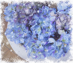 Merry Christmas (Susannaphotographer) Tags: christmas flowers blue blueflowers snow winter flower blu azul pastelblue lightblue