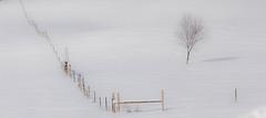 lone tree (jimmy_racoon) Tags: 70200 f4l is canon 5d mk2 landscape lone minnesota pasture tree winter 70200f4lis canon5dmk2
