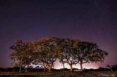El bosquecito (Sergio Ali - Naturaleza en imágenes) Tags: nocturna fotografíanocturna paisaje cielo star estrellas