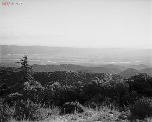 Wild View