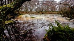 Frozen pond in Jurmo. (Esa Suomaa) Tags: jurmo frozen islands island forest oldforest suomi finland scandinavia europe planetearth olympusomd