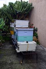 DSC_9769-61 (jjldickinson) Tags: nikond3300 107d3300 nikon1855mmf3556gvriiafsdxnikkor promaster52mmdigitalhdprotectionfilter longbeach bixbyknolls longbeachbeekeepers outreach class beeprepared insect bee honeybee apismellifera hive hiveinspection