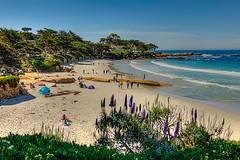 (PhotograTherapy (James Edmondson)) Tags: nikon d850 pacific carmel california beach sand cypress monterey