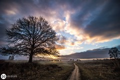 Morning dew on the Veluwe (Luke Hermans Photography) Tags: morning dew ochtend dauw veluwe netherlands nederland nature natuur landscape landschap sunrise zonsopkomst canon 750d naturephotogtaphy natuurfotografie