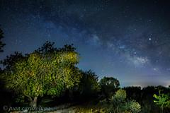 VIA LACTEA (juan carlos luna monfort) Tags: noche night estrellas stars lasenia montsia tarragona arbol tripode nikond7200 irix15 calma paz tranquilidad nocturna largaexposicion