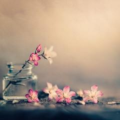 Spring gift (Ro Cafe) Tags: nikkor105mmf28 sonya7iii stilllife flowers littlebottle wood textured naturallight