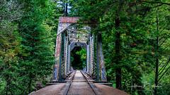 Henry Cowell St Pk-5013 (Jeffrey Balfus (thx for 3.3 Million views)) Tags: felton california unitedstatesofamerica us nikond300s 18230mm bridge tamronlens