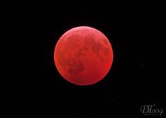 Lunar Eclipse 2019 (Delberson Tiago) Tags:
