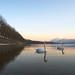 Le Lac des cygnes..