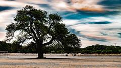 Árbol solitario en el Cielo (Martin Antolin PH) Tags: trees tree arbol contraste paisaje landscape great nature natural naturaleza ramas sunset sunrise atardecer highcontrast altocontraste contraluz color sky pink orange