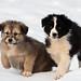 Puppies at Lake Kerkini
