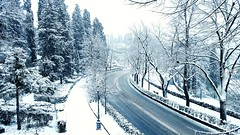 Viale Galileo (Go Ciop Go) Tags: firenze florence toscana tuscany italia italy neve snow nevicata snowfall inverno winter 2018 paesaggioinnevato snowylandscape alberi trees road