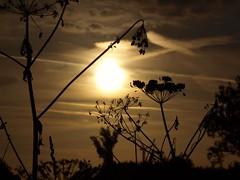 Gegenlicht (photohml) Tags: photograf olympus e520 zuiko 40150 fourthirds dslr spiegelreflex gegenlicht backlight silhouette silhouettes sonne sun outside sonnenaufgang sunrise oly esystem 43 ft