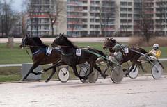 Berlin Trabrennbahn Mariendorf 10.2.2019 (rieblinga) Tags: berlin trabrennbahn mariendorf tempelhof renntag 1022019 pferde sport rennen 6