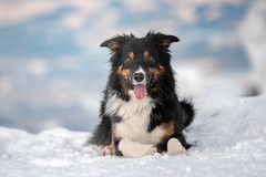 Portrait (Flemming Andersen) Tags: animal bordercollie outdoor snow yatzy dog hund nature pet portrait trojanovice moraviansilesianregion czechrepublic cz