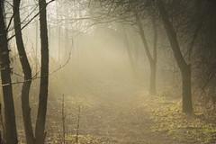 Photo of Light my way