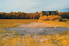 Dormers (IR) (F. Neil S.) Tags: field abandoned farmhouse rural shrouded piedmont northcarolina fullspectrumconversion hoya r25a filter infrared sony nex6 emount
