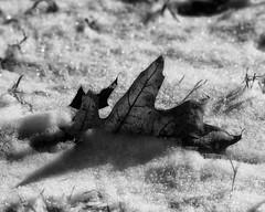 Winter2018-19_SAF1052-2 (sara97) Tags: cold copyright©2019saraannefinke missouri photobysaraannefinke saintlouis snow towergrovepark towergrovepark2019 winter winter201819 winterweather