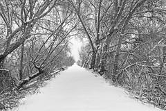 Peavine Trail. Prescott, AZ. (explored) (j1985w) Tags: prescott arizona trail hiking peavinetrail trees winter snow water explore explored