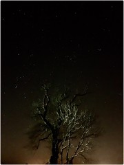Earth and Space (Andy Stones) Tags: earthandspace space stars constellation orion hyades pleiades tree nature naturephotography naturelovers natureseekers image imageof imagecapture photography photoof countryside