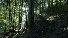 Sonnenstrahlen (Aah-Yeah) Tags: sonnenstrahlen sonnenlicht sunlight sunbeams sunrays wald forest nebel fog achental chiemgau bayern