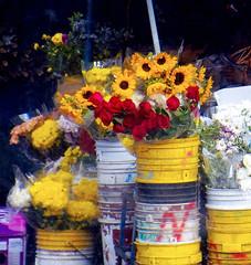 Borrowed and fuzzy flowers (like Monet painting). (Neo-noir) Tags: flores flower street latinamerica sunflower countryside colour colours naturaleza rose market merch vida panama