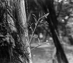 000093680010_ (ian2001s) Tags: fomapan400 gf670 fuji 6x7 filmphotographic bwfilm 120