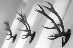 Antlers in the Residenz (Mikey Down Under) Tags: 2019 antlers bavaria europe germany hall munich residencemuseum residenzmuseum risedenz schatzkammer