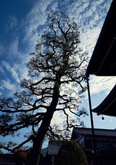 Gujo Hachiman (KaeriRin) Tags: asia japan gifu traditional trees town city temple castle sony sony7m2 28 28mm20 wideangle street cityscape