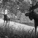 TheHunter: Call of the Wild / What Did You Just Say?