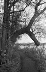 Bender (Arne Kuilman) Tags: olympusom40 apx400 iso400 id11 homedeveloped 1045 amsterdam nederland netherlands 50mm walk winter nieuwemeer boom tree