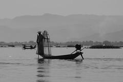 Fishing (Patrick Doreau) Tags: pêcheur nasse filet fishing eau water lac lake chapeaunbateau boat birmanie myanmar asie asia inlé