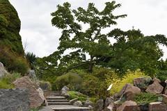 Rockery Path (Bri_J) Tags: copenhagenbotanicalgarden botaniskhave universityofcopenhagen copenhagen denmark københavn danmark botanicalgardens park nikon d7500 rockery path tree