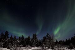 Z19_0208 LT (Zoran Babich) Tags: winter snow lapland lappi finland suomi northernlights auroraborealis