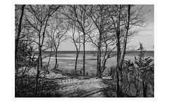 Long Island (PhotoRapper (Michael)) Tags: sigma sd1 merrill sigmasd1merrill sigma1835mmf18dchsmart sigmalens sigmaartlens foveon digital bw kingspark longislandsound ny newyork longisland nissequogueriver olddockroadpark olddockharbor