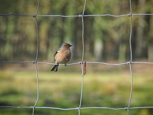 Bird Bokeh - 31. März 2019 - Schleswig-Holstein