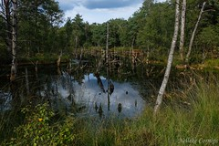 Pond in Pietzmoor (Nelleke C) Tags: 2018 buitenlandsweekend lüneburgerheide pietzmoor bog duitsland germany holiday hoogveen landscape landschap vakantie veenput