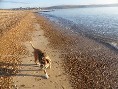 All is Quiet on New Year's Day... (andreboeni) Tags: reba boxer dog chien hund perros dogs chiens hunden beach sea sunny newyearsday january1 1january