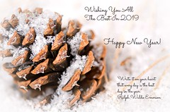 Happy New Year! (catmccray) Tags: pinecone snow holidaygreeting newyear