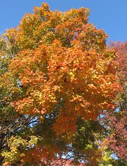 Fulton County Courthouse Fall Foliage (Salem, Arkansas) (courthouselover) Tags: arkansas ar courthouseextras fultoncounty salem arkansasozarks ozarkmountains northamerica unitedstates us