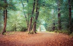There are so many beautiful reasons to be happy (Ingeborg Ruyken) Tags: 2018 autumn october woods berlicum fall flickr herfst ochtend morning wamberg tree forest oktober natuurfotografie 500pxs instagram shertogenbosch bos